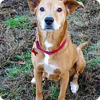 Adopt A Pet :: Betsy - Potomac, MD