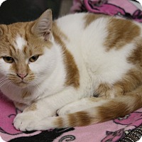 Adopt A Pet :: Erik - Medina, OH