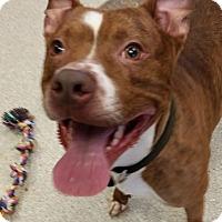 Adopt A Pet :: RUGAR - Tiffin, OH