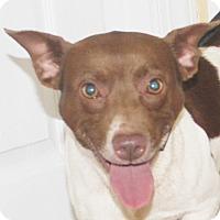 Adopt A Pet :: Carson - Chapel Hill, NC