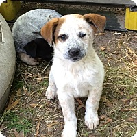 Adopt A Pet :: Salem - Barnegat, NJ