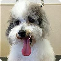 Adopt A Pet :: Little Bit - San Luis Obispo, CA