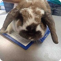 Adopt A Pet :: A593879 - Louisville, KY