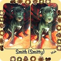 Adopt A Pet :: Smitty meet me 9/9 - Manchester, CT