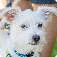 Adopt A Pet :: Crouser - San Diego, CA
