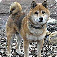 Adopt A Pet :: Tiberious - Yreka, CA