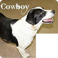 Adopt A Pet :: Cowboy - Danbury, CT