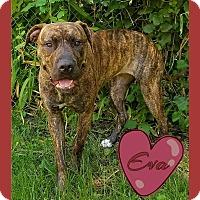 Adopt A Pet :: Eva - Des Moines, IA