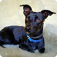 Adopt A Pet :: Base Runner - Casa Grande, AZ