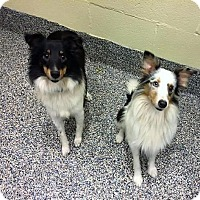 Adopt A Pet :: Apollo & Athena - Buffalo, NY