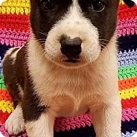 Adopt A Pet :: Tucker - Modesto, CA
