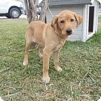 Adopt A Pet :: A009666 - Rosenberg, TX