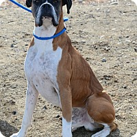 Adopt A Pet :: Logan - Gardnerville, NV