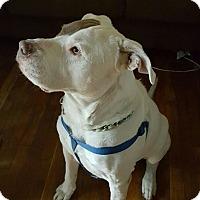 Adopt A Pet :: Mack - Beverly Hills, CA