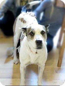 Australian Cattle Dog Mix Dog for adoption in Marina del Rey, California - Nina
