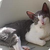 Adopt A Pet :: Bubba - Tucson, AZ