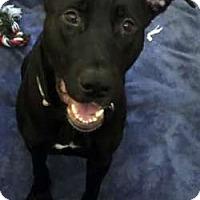 Adopt A Pet :: Janie - Sudbury, MA