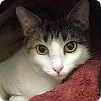 Adopt A Pet :: Wilma - Harrison, NY