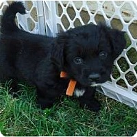 Adopt A Pet :: Douglas - Arlington, TX