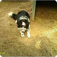 Adopt A Pet :: Jax - Emory, TX