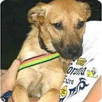 Adopt A Pet :: Bonnie - Kingwood, TX