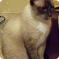 Adopt A Pet :: Sammy Night Owl - Ennis, TX