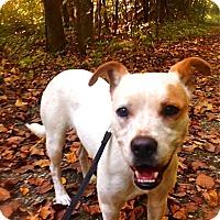 Adopt A Pet :: Hope - Pawling, NY