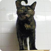Adopt A Pet :: Bridget - Dover, OH