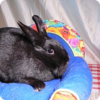 Adopt A Pet :: Shauna - Newport, DE