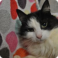 Adopt A Pet :: Winnie - Rockaway, NJ