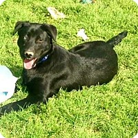 Adopt A Pet :: Shadow - Carlisle, TN