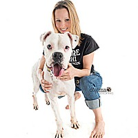 Boxer Dog for adoption in Los Angeles, California - ZANE