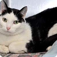 Adopt A Pet :: Mickie - Northbrook, IL