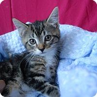 Adopt A Pet :: Klondike - Winchendon, MA