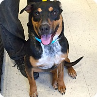 Adopt A Pet :: Rhodey in CT - Manchester, CT