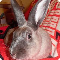 Adopt A Pet :: Cassidy - Newport, KY