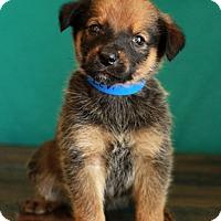 Adopt A Pet :: Levi - Waldorf, MD