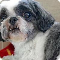 Adopt A Pet :: Rosalind - Thompson's Station, TN