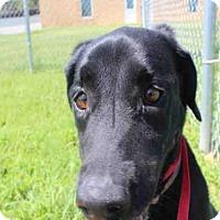 Adopt A Pet :: A024673 - Norman, OK