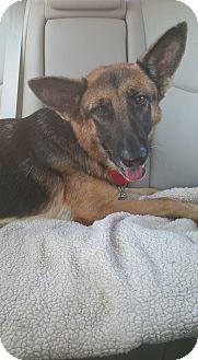 German Shepherd Dog Mix Dog for adoption in CUMMING, Georgia - Summer