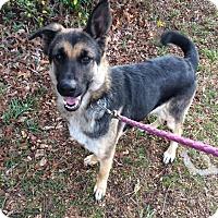 Adopt A Pet :: Marisol - Unionville, PA