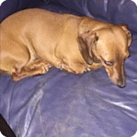 Adopt A Pet :: Molly - Courtesy Listing - Wilmington, OH