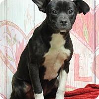Adopt A Pet :: McKenzie (Needs foster) - Washington, DC