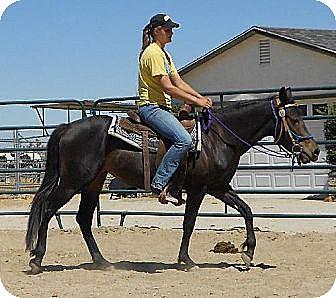 Mustang for adoption in Phelan, California - Dreamer