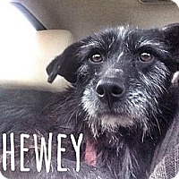 Adopt A Pet :: Chewey - San Antonio, TX