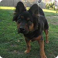 Adopt A Pet :: Barry - Orange Park, FL
