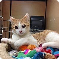Adopt A Pet :: Sunkist - Monroe, GA