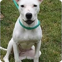 Adopt A Pet :: Sydney - Okatie, SC