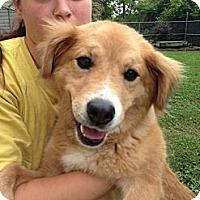 Adopt A Pet :: Marilyn - Brattleboro, VT