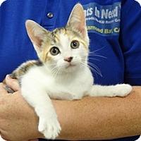 Adopt A Pet :: MILA - Diamond Bar, CA